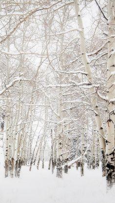 Birch Trees Winter Landscape #iPhone #5s #wallpaper