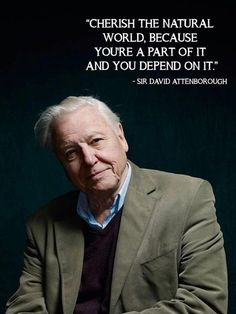Sir David Attenborough, my idol. He has taught me so much, and there is so much more I could learn from him. David Attenborough Quotes, Best Quotes, Life Quotes, Funny Quotes, Amazing Animals, Save Our Earth, We Are The World, Nature Quotes, Earth Quotes