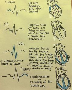 Electrical Events of the Cardiac Cycle, ECG and electrical activity of the heart - NCLEX Quiz Cardiac Cycle, Cardiac Nursing, Pharmacology Nursing, Ob Nursing, Funny Nursing, Mnemonics For Nursing, Pathophysiology Nursing, Study Nursing, Med Surg Nursing