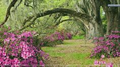 Magnolia Plantation And Gardens Groupon