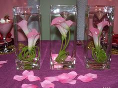Buy fresh cut wholesale Calla Lilies, for florists, corporate events and DIY brides. Discover top grade calla Lilies, Double Calla Lilies, and Mini Calla Lilies. Purple Calla Lilies, Calla Lily Flowers, Calla Lily Wedding, Wedding Flowers, Peacock Wedding, Calla Lily Centerpieces, Tall Wedding Centerpieces, Valentine Day Table Decorations, Wedding Decorations