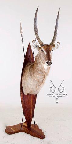 Waterbuck Pedestal Euro Mounts, African Room, Time To Hunt, Taxidermy Display, African Crafts, Trophy Rooms, Deer Skulls, African Safari, Greatest Adventure