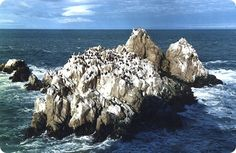 Argentina Discovery - Cabo Blanco Nature Reserve.