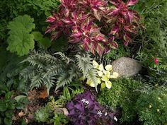 oxalis in the garden //  Jane's garden in Prior Lake, Minnesota | Fine Gardening