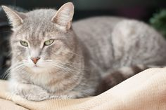 Philou Photos, Cats, Animals, Gatos, Animales, Pictures, Animaux, Kitty, Cat