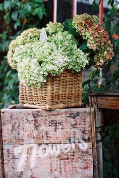 film. photography by Natasha Calhoun Flowers Nature, Love Flowers, Fresh Flowers, Dried Flowers, Beautiful Flowers, Hortensia Hydrangea, Hydrangea Garden, Hydrangea Arrangements, Square Baskets