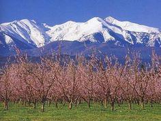 Canigou au printemps Guide du tourisme dans les Pyrénées-Orientales Languedoc-Roussillon
