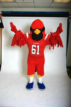 Coop lets us know that Cardinals soar high!