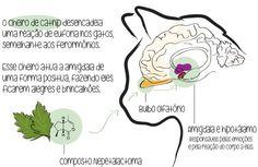Como o CATNIP atua no cérebro do gato? | CATNIP CatUP felicidade do seu gato é verde