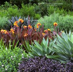 mixed plantings of agaves and canna lilies, plantings, gardening, landscaping, flowers, landscape design, landscape architecture