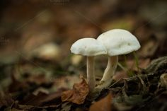 Check out Mushroom by Screeny's Photo Bucket on Creative Market