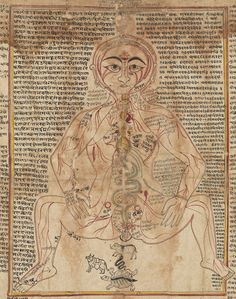 Anatomical Body India, Gujarat 18th century Ink and color on paper