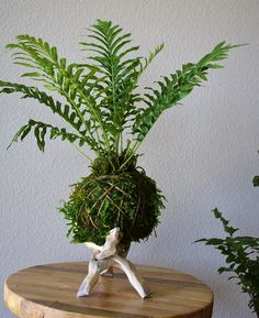 Ferns Garden, Moss Garden, Orchids Garden, Inside Plants, Small Plants, Indoor Plants, Terrariums, Garden Terrarium, Garden Crafts