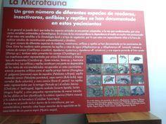 Además de los grandes mamíferos que llegaron a habitar la zona también se ha podido encontrar un gran número de especies de un menor tamaño como pudieran ser pequeños roedores, anfibios y reptiles. Toda esta variedad ayudaba a la gran variedad de fauna que había en aquel tiempo en nuestra comunidad.