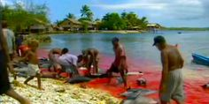 Our mission is to end the Dolphin Holocaust in the Solomon Islands once and for all. http://www.avaaz.org/en/petition/Our_mission_is_to_end_the_Dolphin_Holocaust_in_the_Solomon_Islands_once_and_for_all/?pv=1# @SeaShepherd #defendconserveprotect