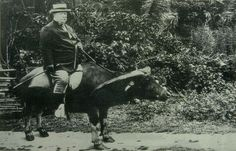 Yes, that is President William Howard Taft riding a water buffalo.