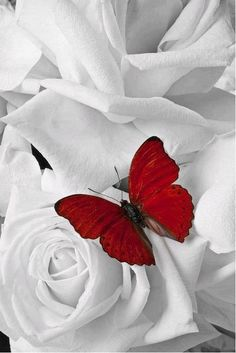 red butterfly,,,color splash,,,
