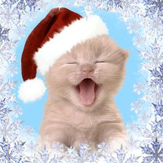 Happy Christmas Kitty cute animals cat happy animated kitten kitty christmas christmas pics