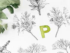 Pilon Spice Company Branding on Behance