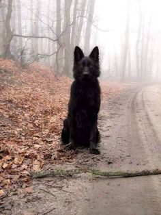 Wicked Training Your German Shepherd Dog Ideas. Mind Blowing Training Your German Shepherd Dog Ideas. Beautiful Dogs, Animals Beautiful, Cute Animals, Big Dogs, Cute Dogs, Dogs And Puppies, Amor Animal, German Shepherd Puppies, German Shepherds