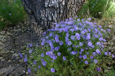 10 Perennial flowers that thrive in compacted clay soil - Mankato Green Culture   Examiner.com