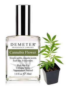 Cannabis Flower scented cologne.