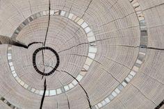 Side Table / Stool2014Whitened oak, Inlaid molten glassMarbles, Ceramics, Sandstone, SilverEach UniqueH 17.5, 16 x W 11.25(45, 41 x 28.5 cm)