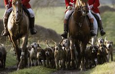 Hunters and Hounds // NatGeo  This really looks like fun!