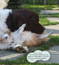 """Am I Adopted? 