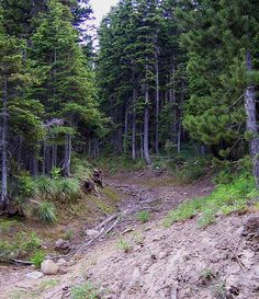 Oregon Trail, Mt. Hood