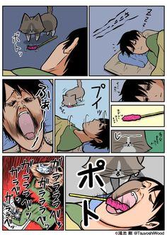 @TsuyoshiWood 鴻池先生 Types Of Cats, Cat Comics, Hetalia, Neko, Kawaii, Shit Happens, Manga, Humor, Memes