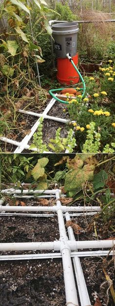 Alternative Gardning: PVC gravity feed drip irrigation