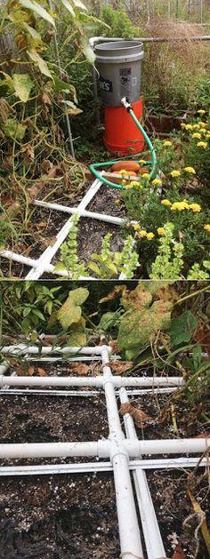 Alternative Gardning: PVC gravity feed drip irrigation