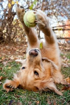"""Little yellow ball I love you so much""......So much fun. ❤️❤️❤️"
