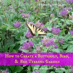 How to Create a Butterfly, Bird and Bee-Terrific Garden