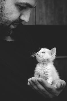 Black And White Photography Portraits - The Best You've Ever Seen! Image by Marius Neag Black And White Photography Portraits, Animal Photography, Portrait Photography, Urban Photography, Color Photography, Wedding Photography, Kittens Cutest, Cats And Kittens, Cute Cats