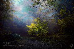 http://ift.tt/1ZY8ZTJ #Nature breathtaking #Photos Presence by PhoenixfeatherLight http://ift.tt/1Rpwii7