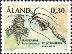 Mysis relicta & Saduria entomon (Collection Georges Declercq)