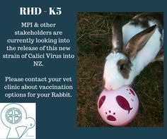 This strain of Calici Virus may soon be introduced into NZ - is your Rabbit vaccinated?