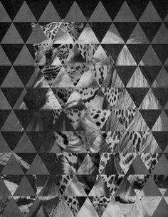 Perroleopardo.  Dogleopard.