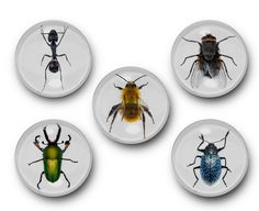 New to TreeSawCrafts on Etsy: Insects Magnets - Bugs Bee Fly Butterfly Stink Bug Beetle Insect Ant Housefly Arachnid Spider Cockroach Roach Creepy Crawly (9.99 USD)