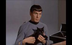 Weltraumkatzen Tag.