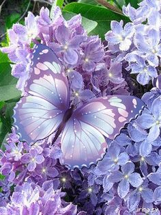 Lavender Flowers & Butterfly nature flowers butterfly animated purple gif sparkle lavender