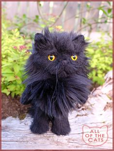 78 Best Allofthecats Images Plushies Stuffed Toys Long Hair