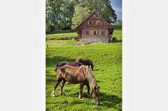 v Krkonoších - okolí chalup Cabin, House Styles, Home Decor, Decoration Home, Room Decor, Cabins, Cottage, Home Interior Design, Wooden Houses