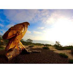 Caliparks : Torrey Pines State Reserve Torrey Pines State Reserve, Local Parks, Park Photos, Park City, Road Trip, California, Regional, Travel, Instagram