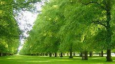 Bushy Park - Teddington Middlesex