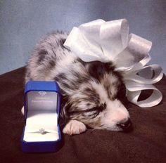 10 Cute + Creative Pet Proposals That Will Make You Melt via Brit + Co.
