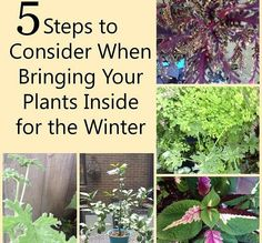 5 Steps for Bringing Your Plants Indoors for the Winter