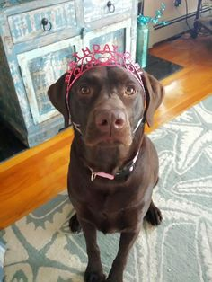Stella turns two